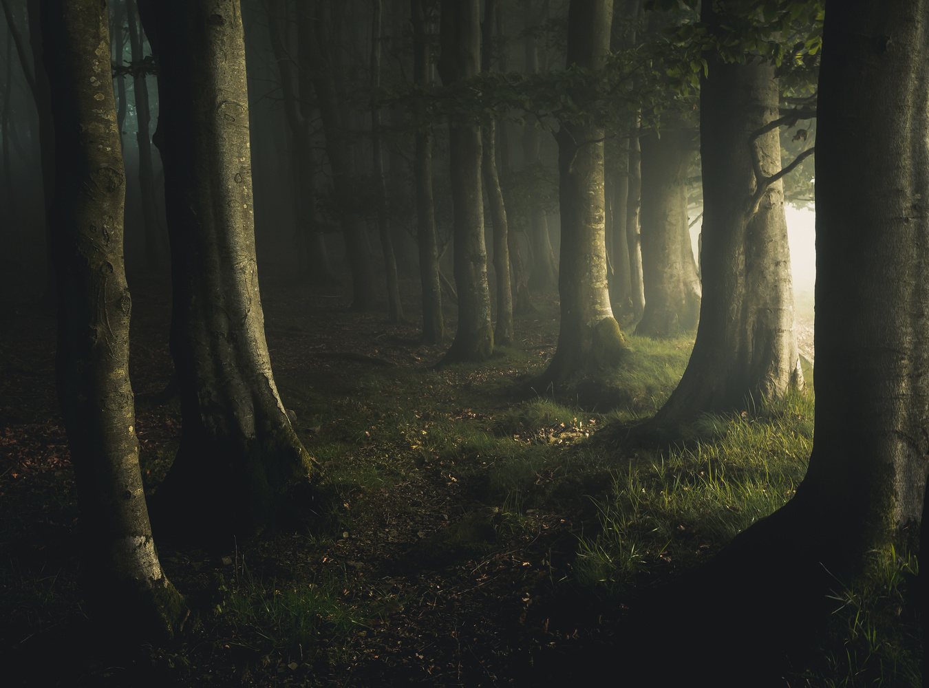 The limit of the forest by Daniel Martin