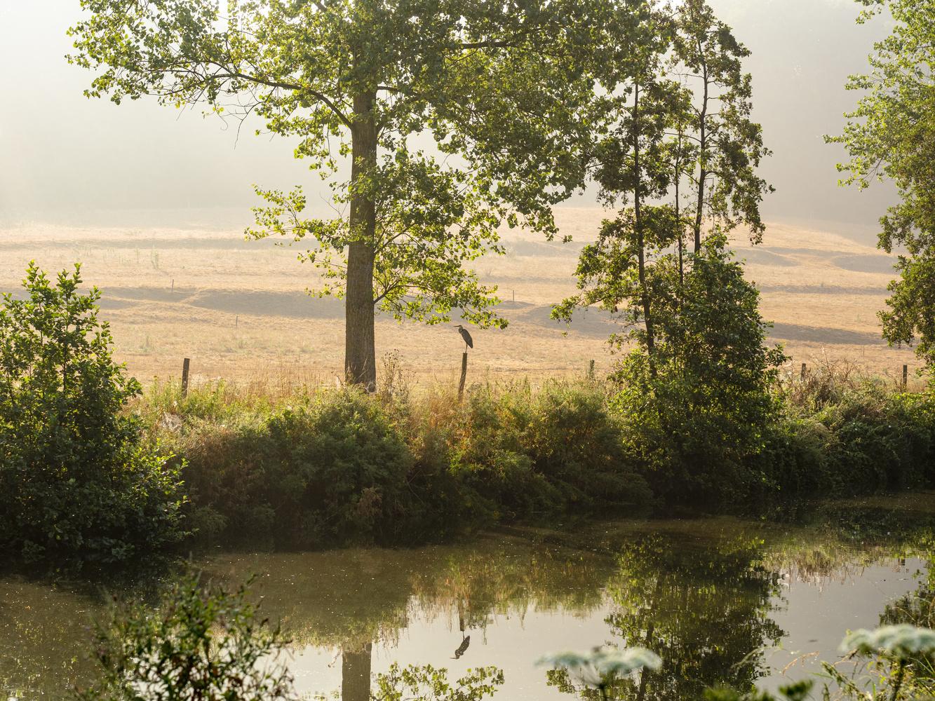 River Dender by Richard Gale