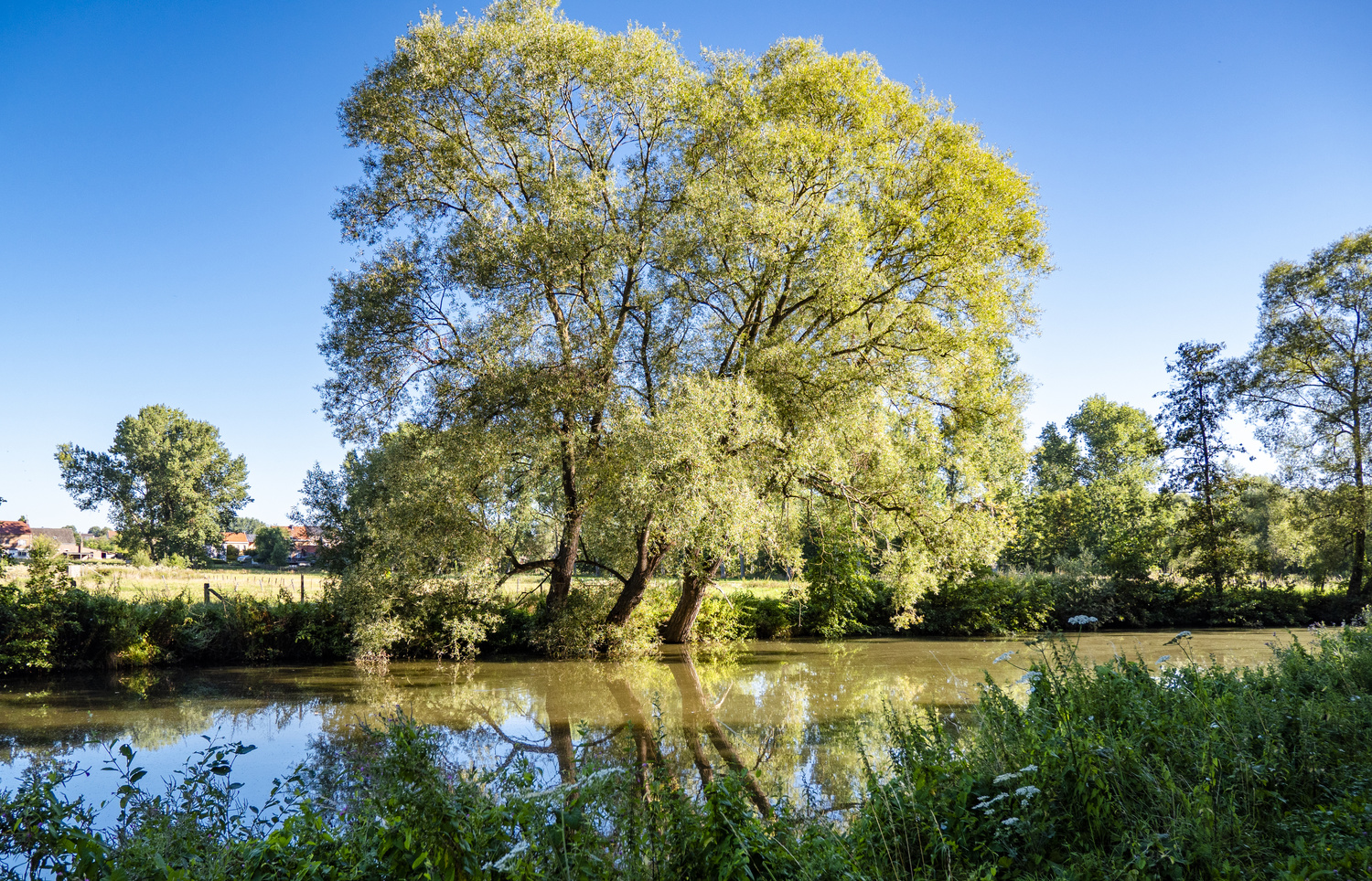 River Dender Willows by Richard Gale