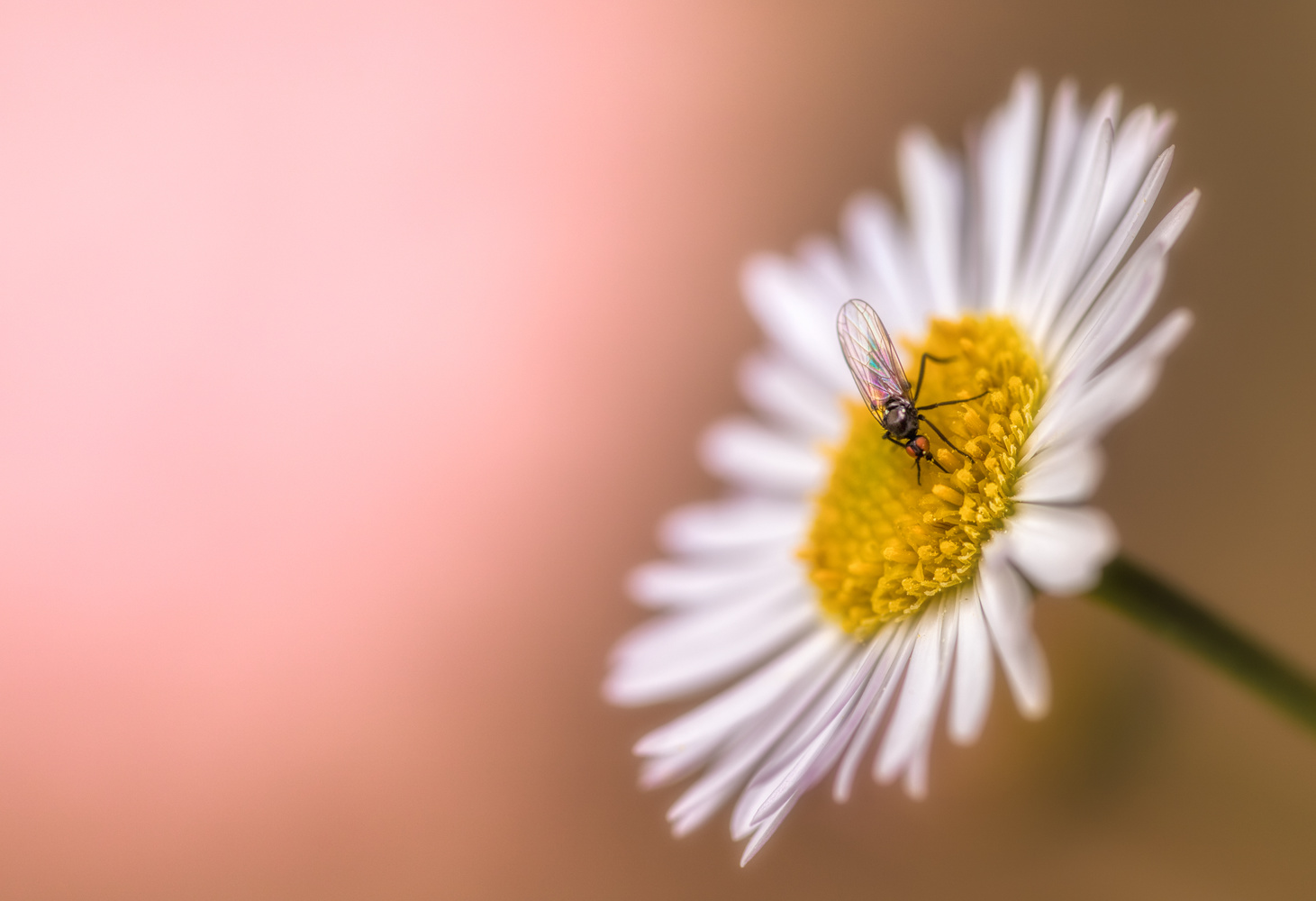 Spring on Pink by Tiago Marques