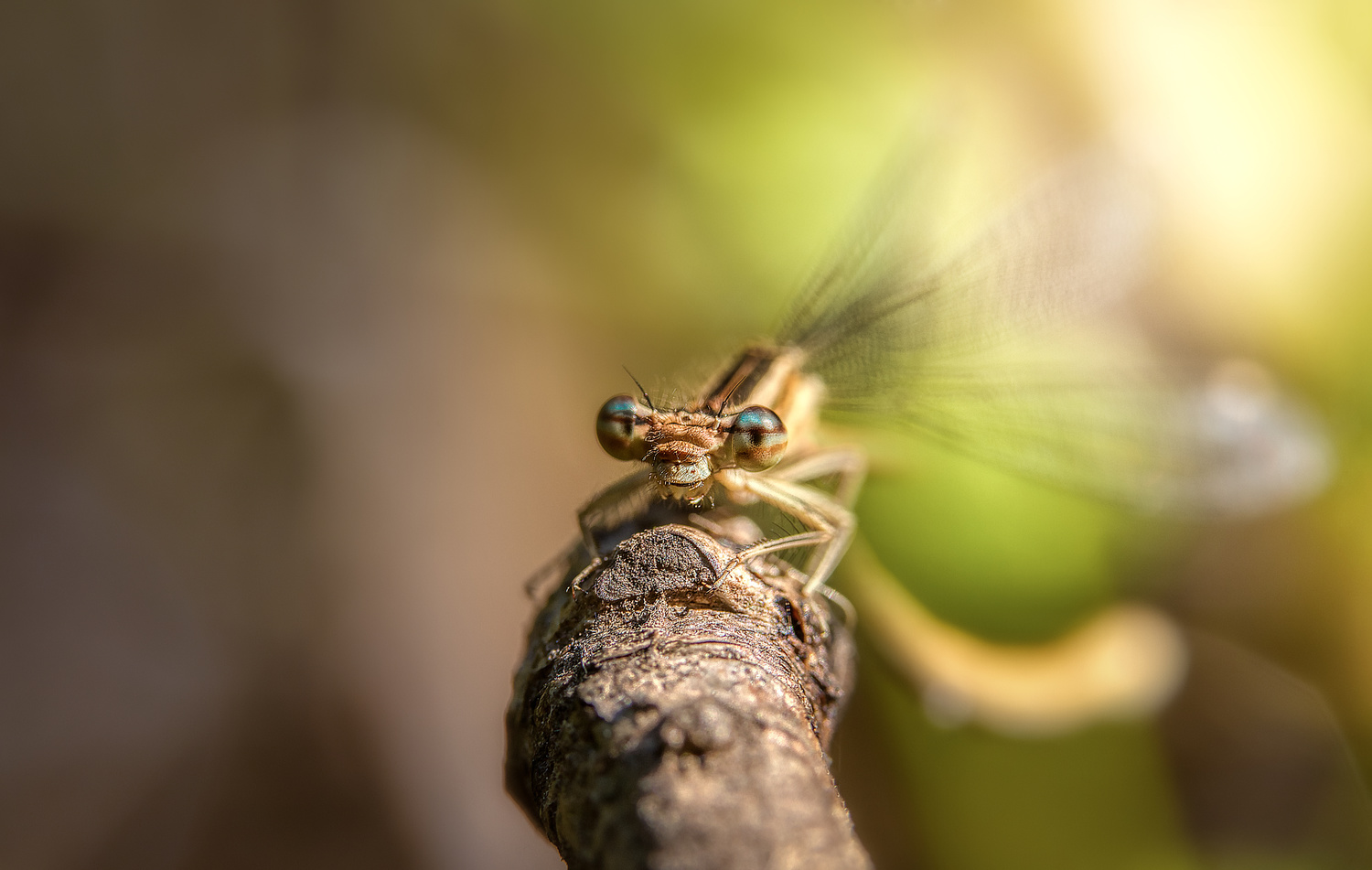 Dragonfly by Tiago Marques