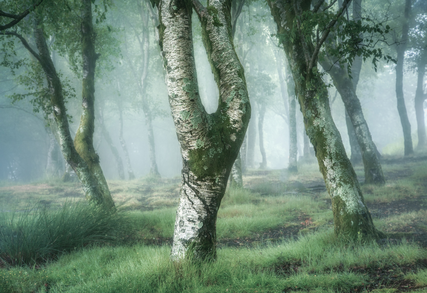 Birch Photo Collection. 3 by Tiago Marques