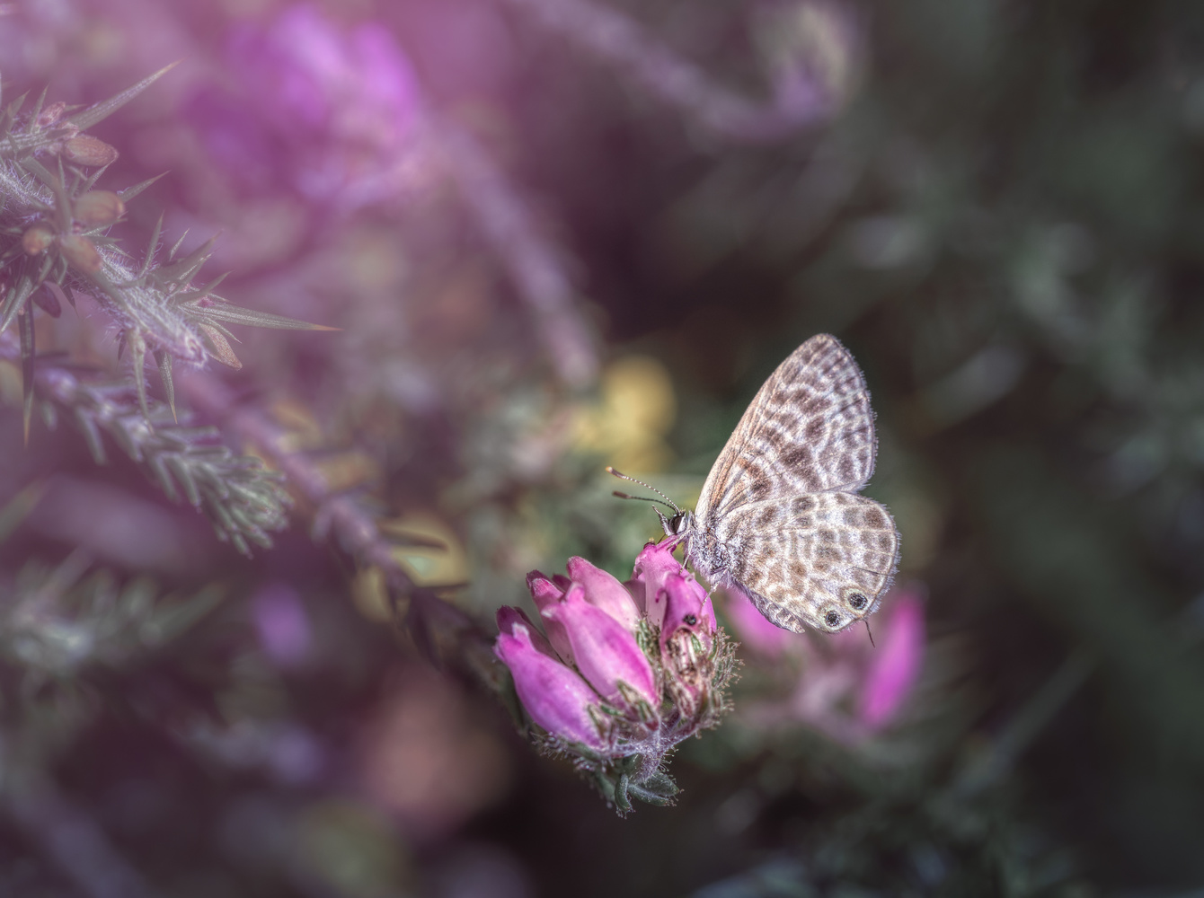 Purple Dream by Tiago Marques