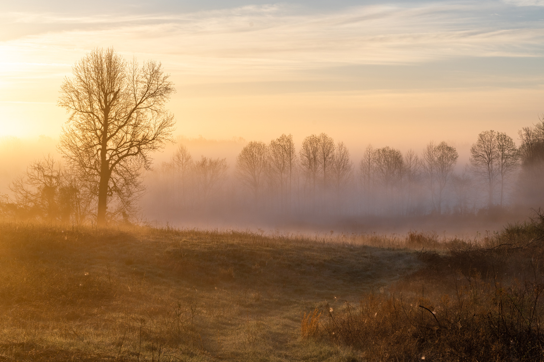 Foggy Sunrise by Craig Waltrip