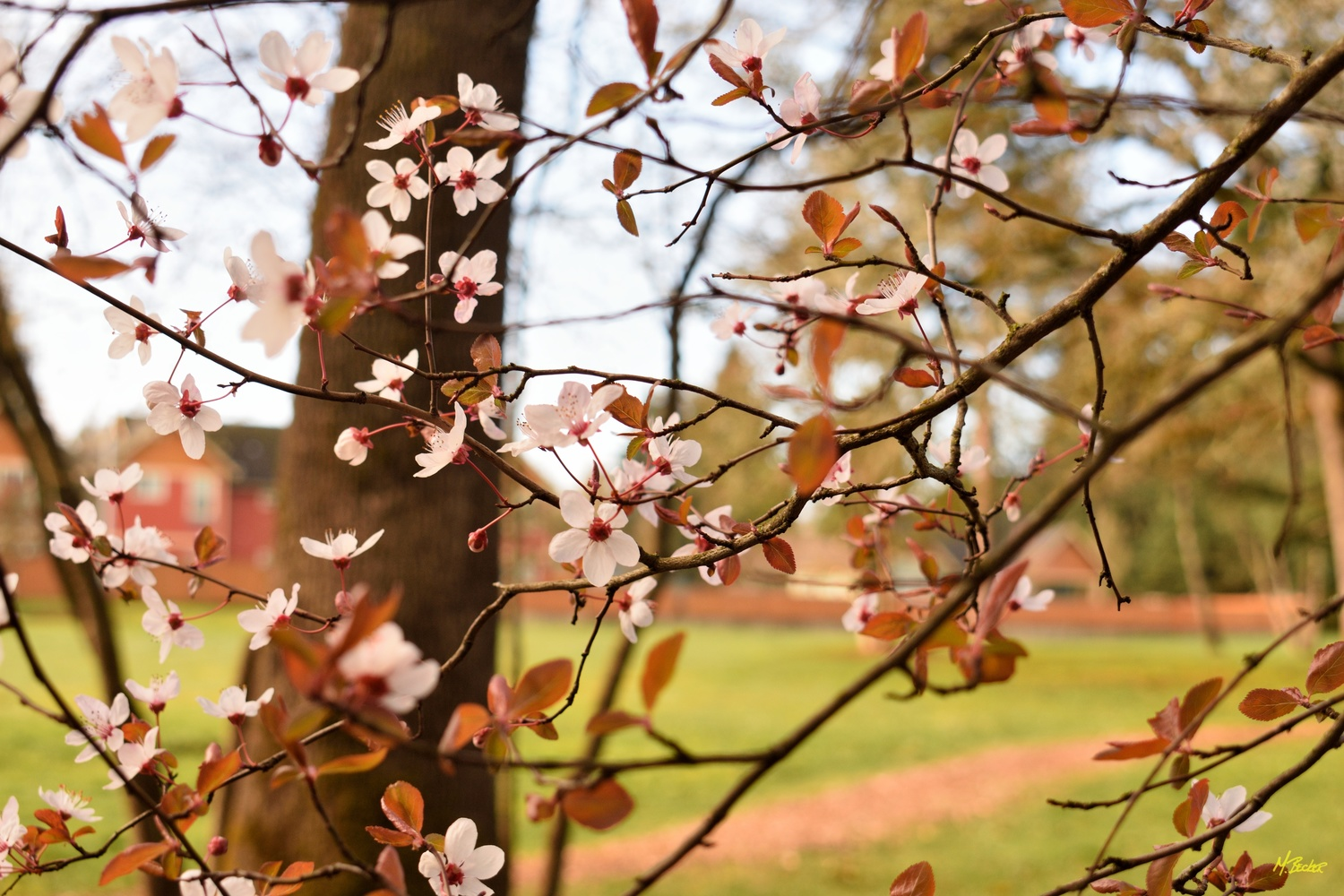BLOSSOMS by Michael Becker
