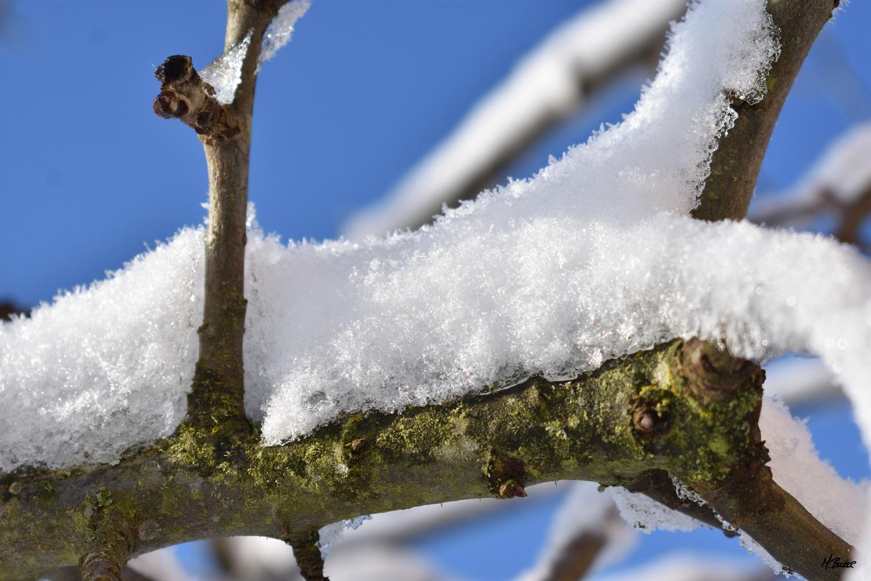 SNOWY BRANCH by Michael Becker