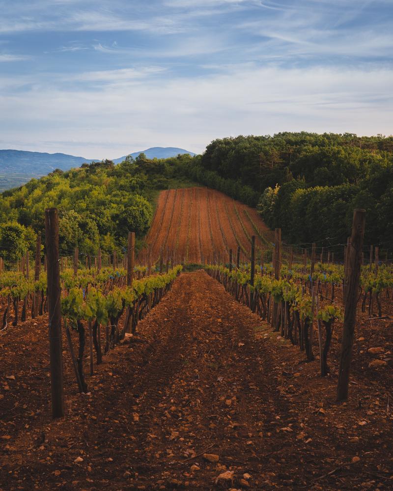 before wine by Nemanja Saric