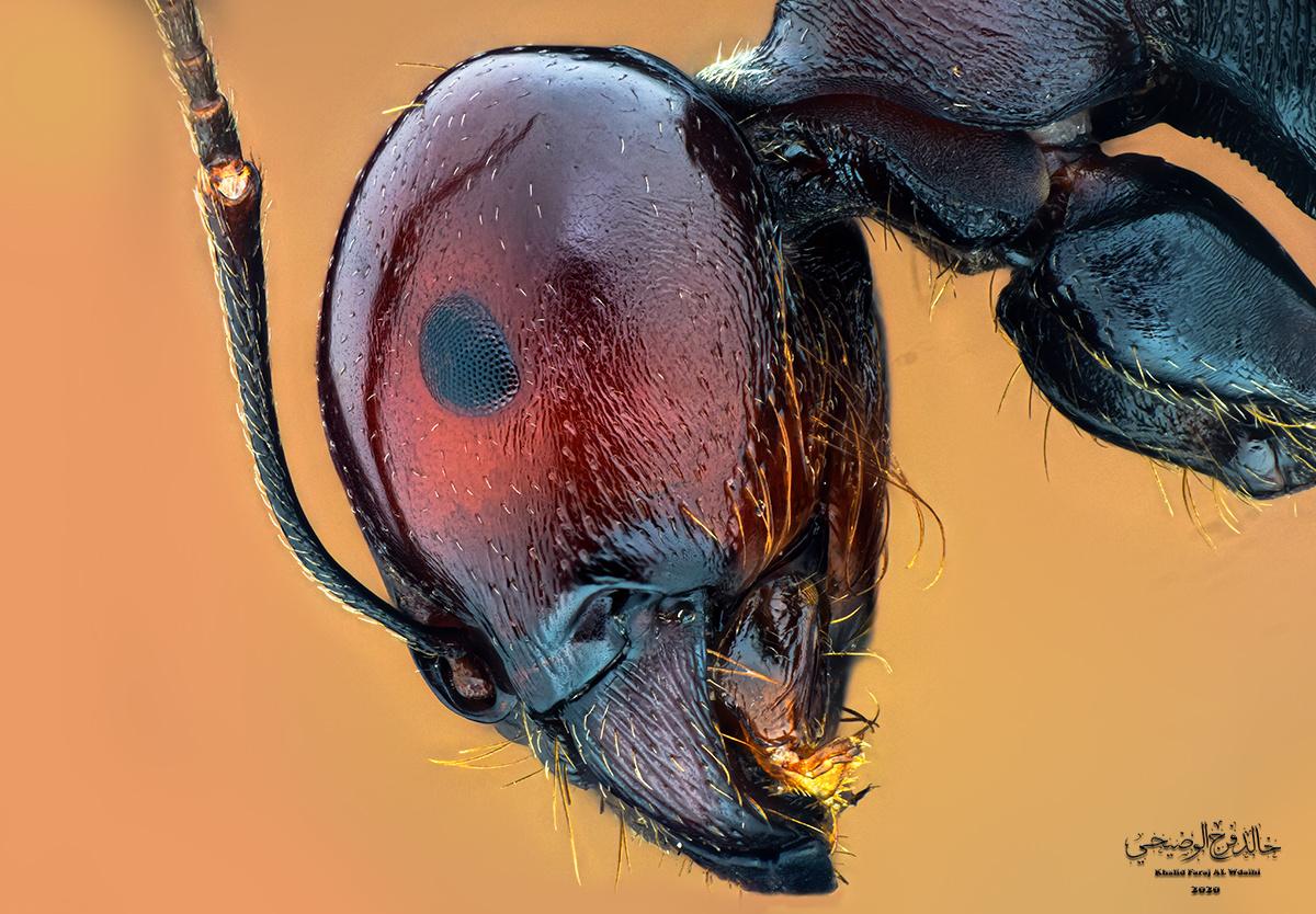 Ant by Khalid Faraj Al Wdhaihi