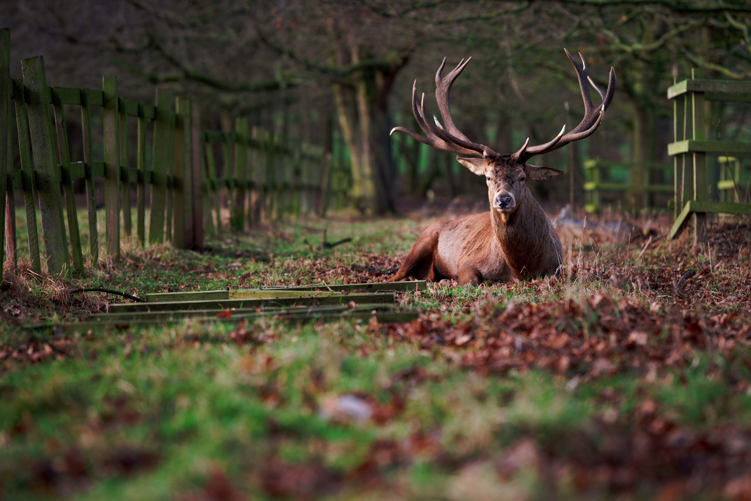 Stag by Thomas Wragg