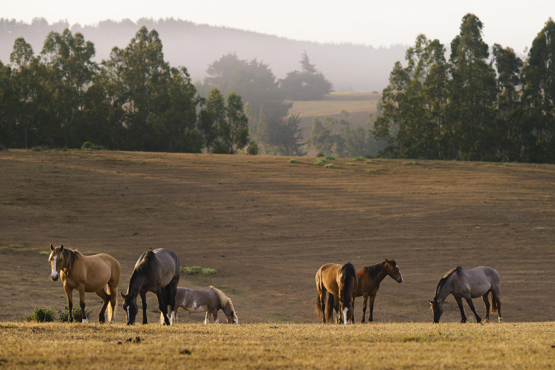 Horses by Thomas Wragg