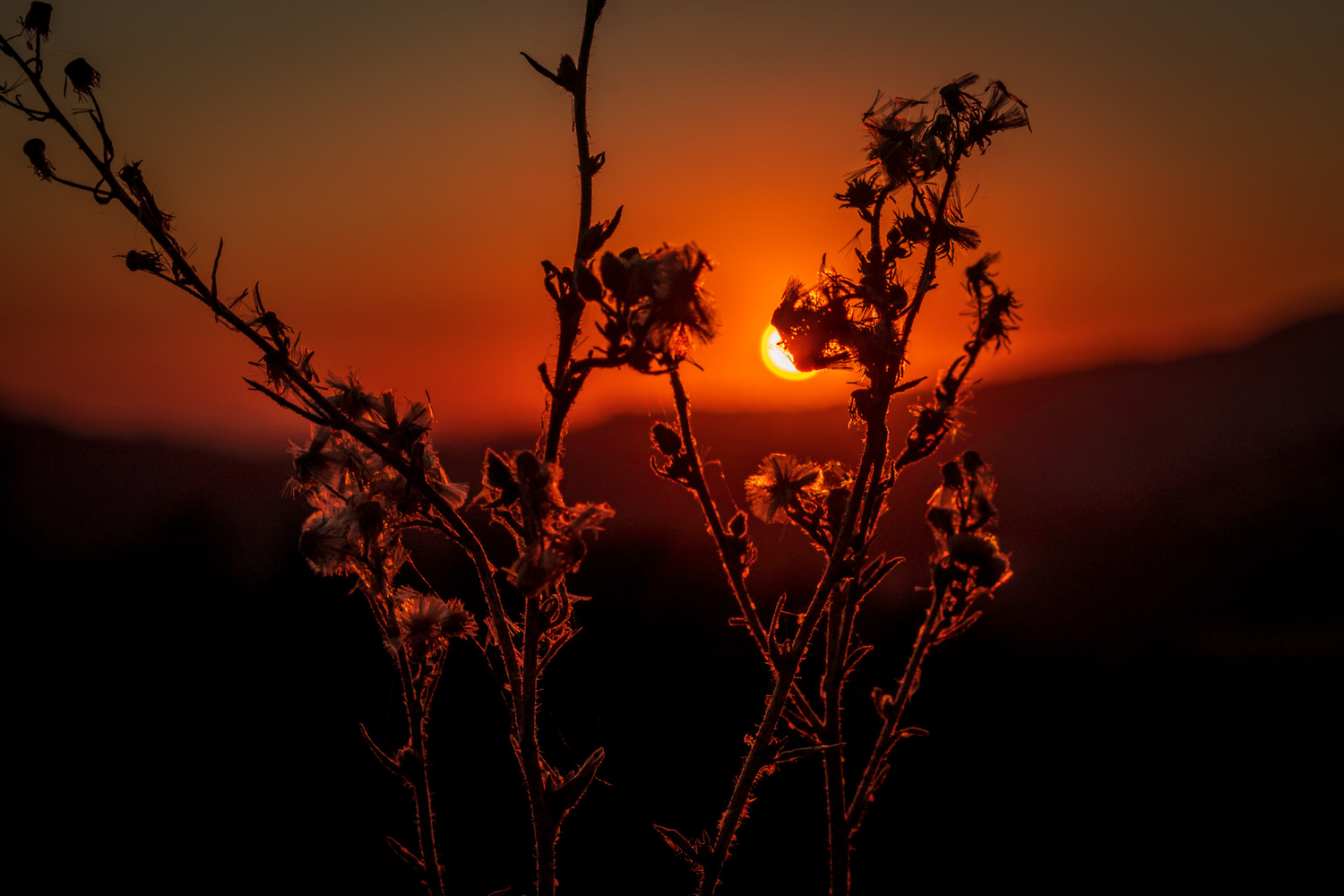 Weeds in the sunset by Jacob Pelley