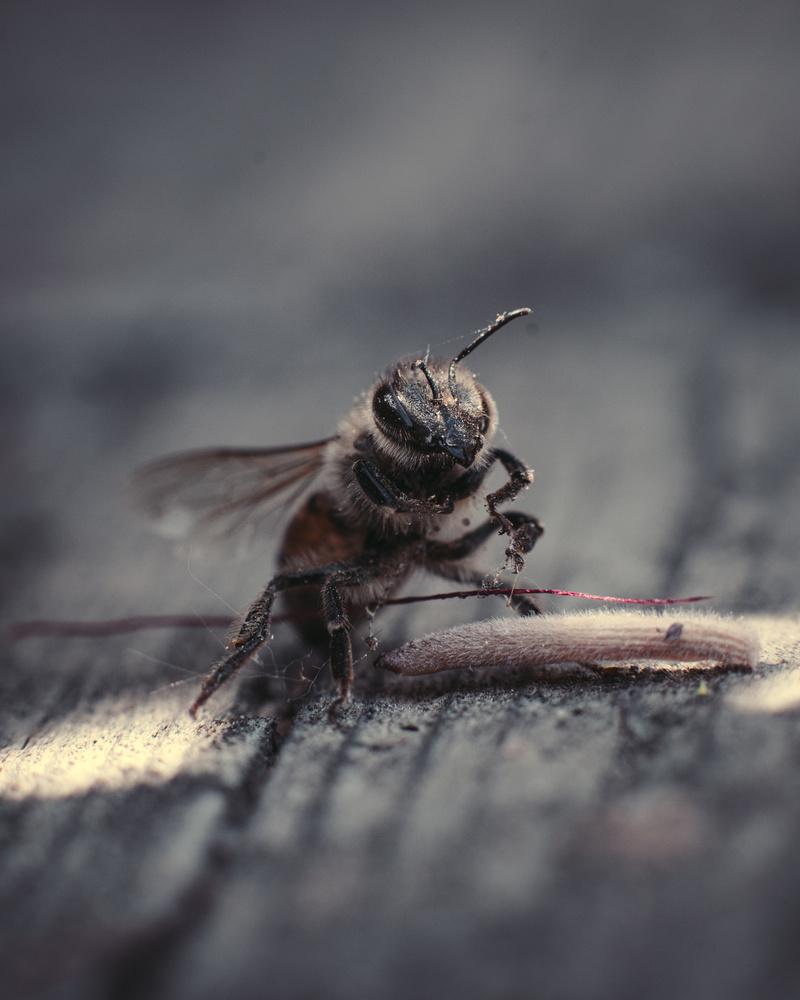 Bye bee by Jacob Pelley