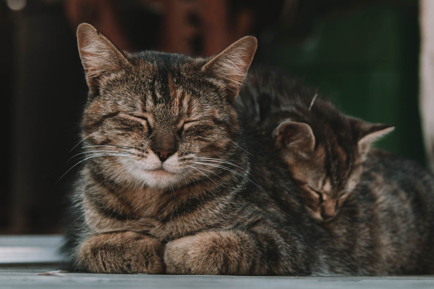 Afternoon Catnap by Jacob Pelley