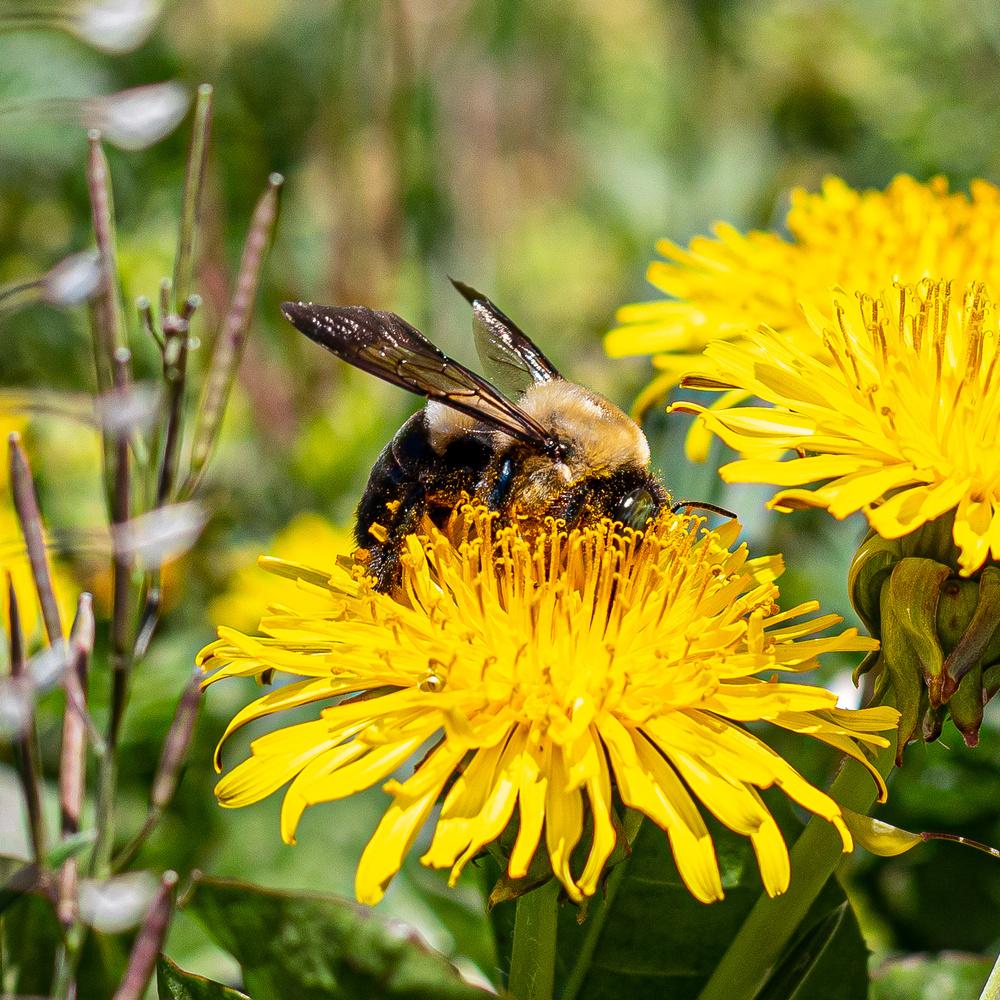 Bee Gathering Pollen by Toby Hagan