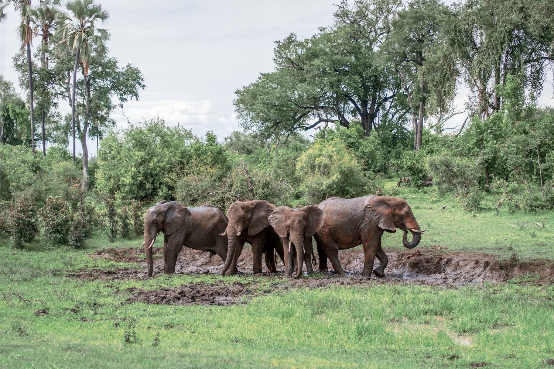 The Elephant Baths by Joe Unsworth