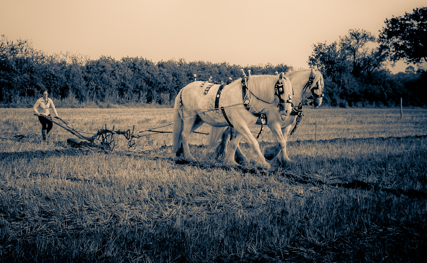 Ploughing with heavy horses by Chris Mummery
