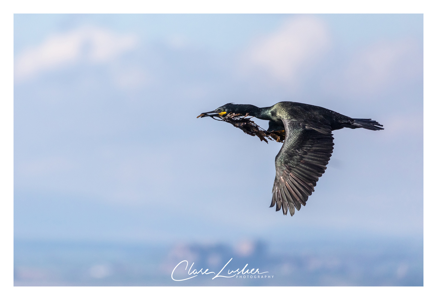 Shag by Clare Lusher