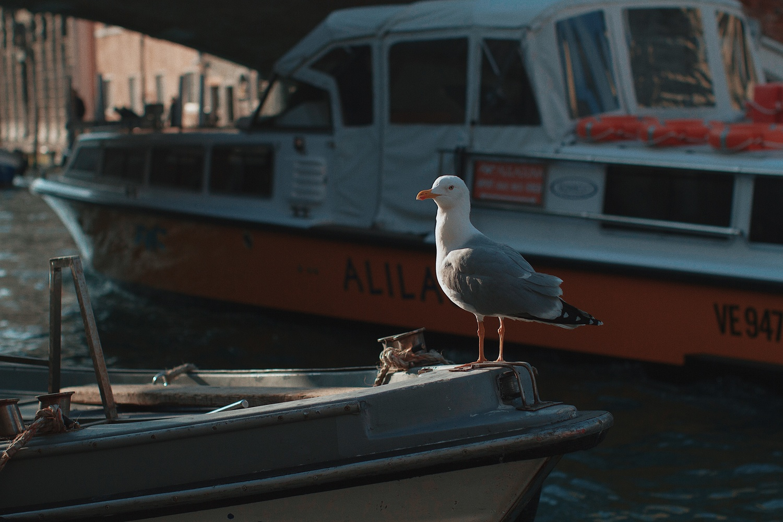 Bird by Ricardo Castelin
