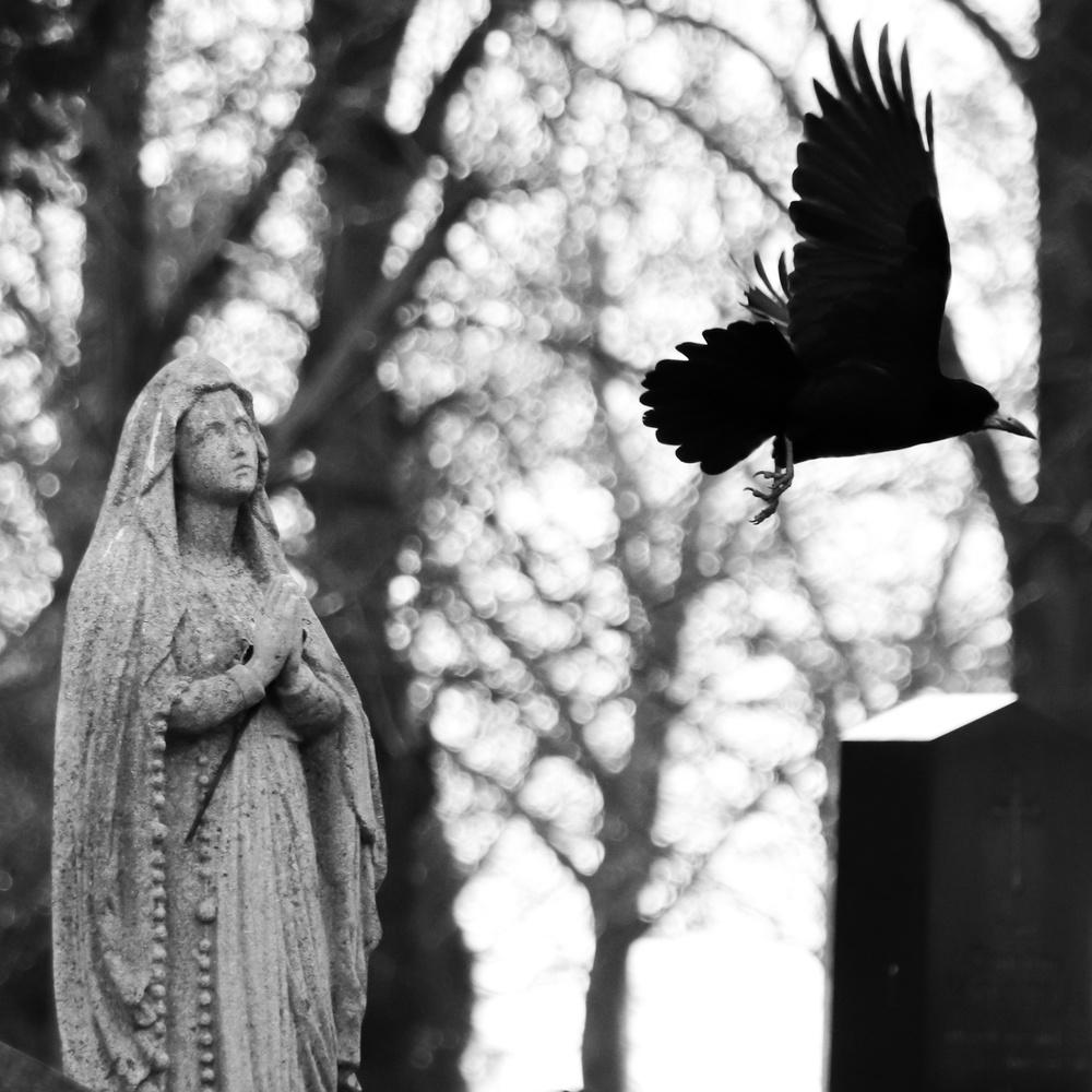 The Raven by Ryan Reynolds