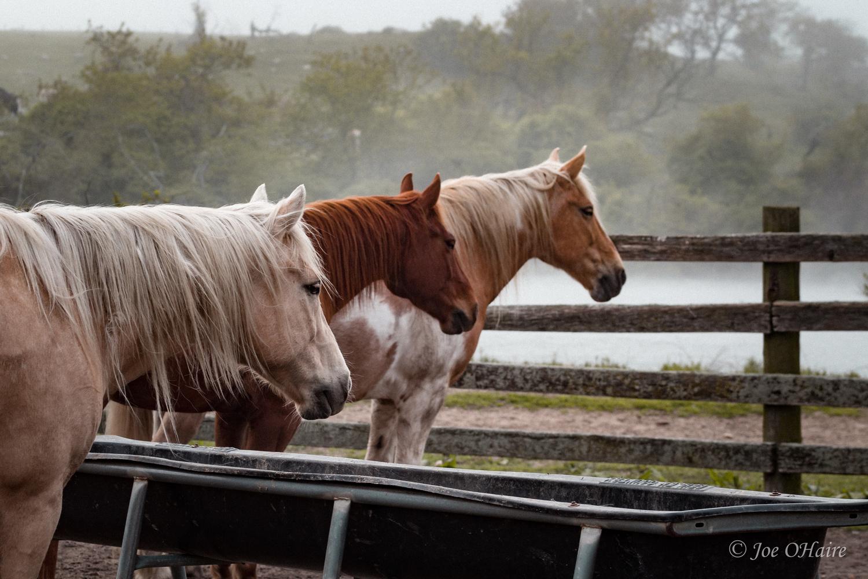 3 Horse Align by Joe OHaire