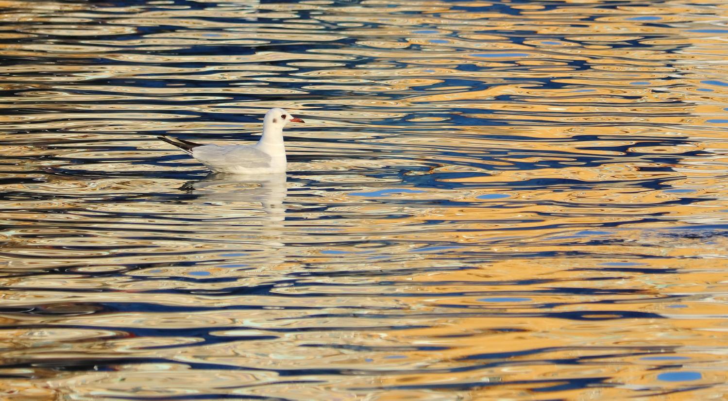 Gull by Alex Boros