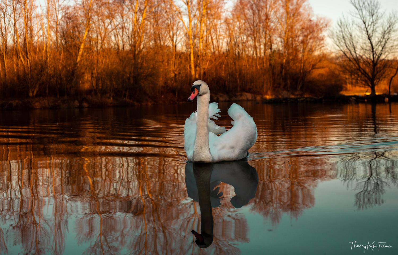 Like a Swan by Thierry KUBA