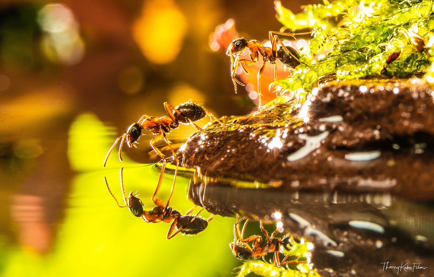 Water and ants by Thierry KUBA