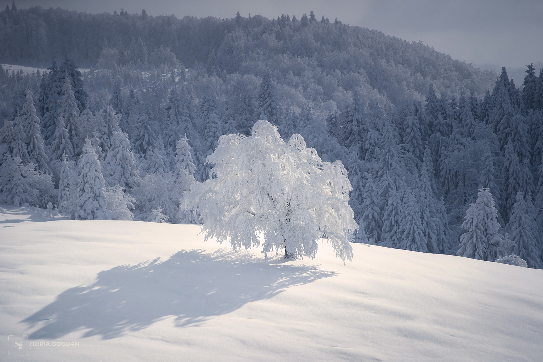 Frozen in the sun by Horia Bogdan