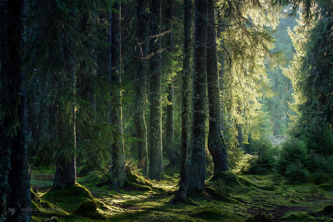Fairy-tale woodland by Horia Bogdan