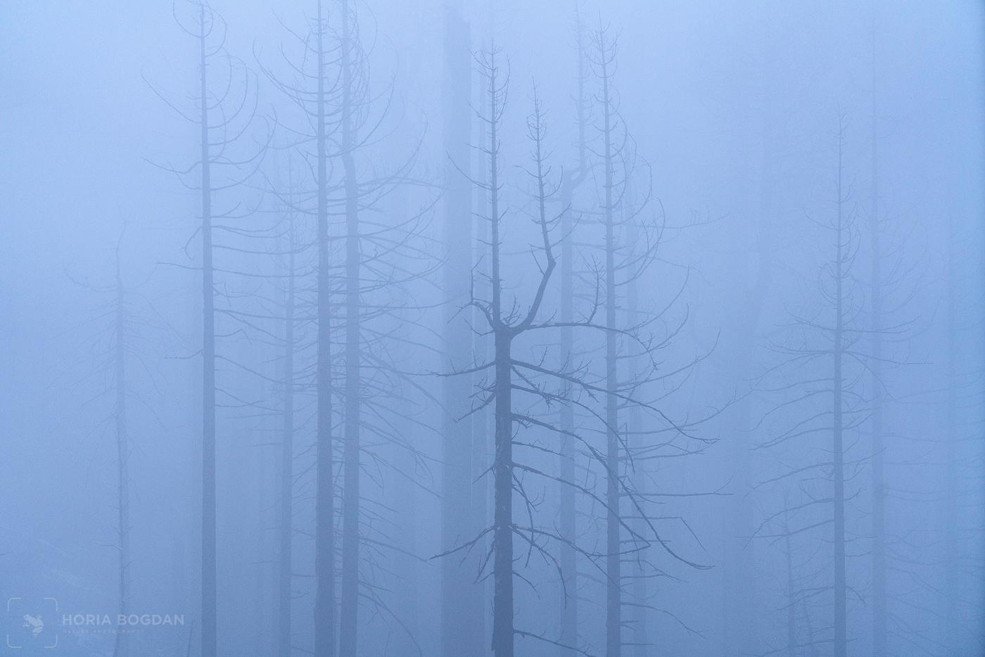 Eeriness by Horia Bogdan