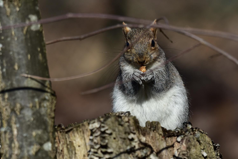 squirrel eating by Chris Freeman