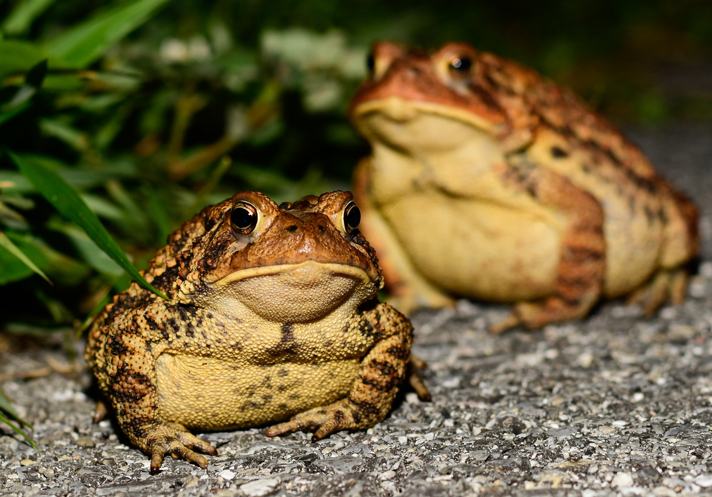 hoppy the toad by Chris Freeman