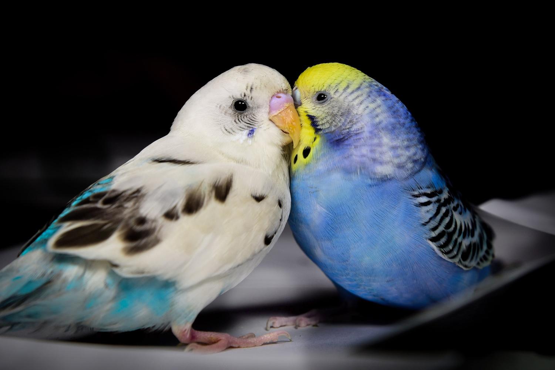 love birds by Chris Freeman