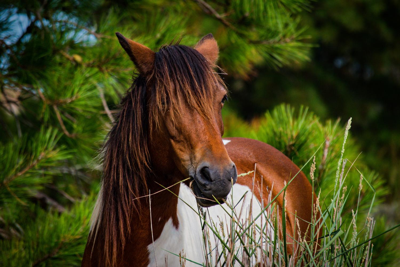 horse by Chris Freeman