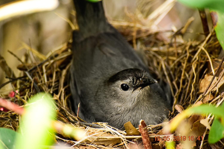 catbird by Chris Freeman