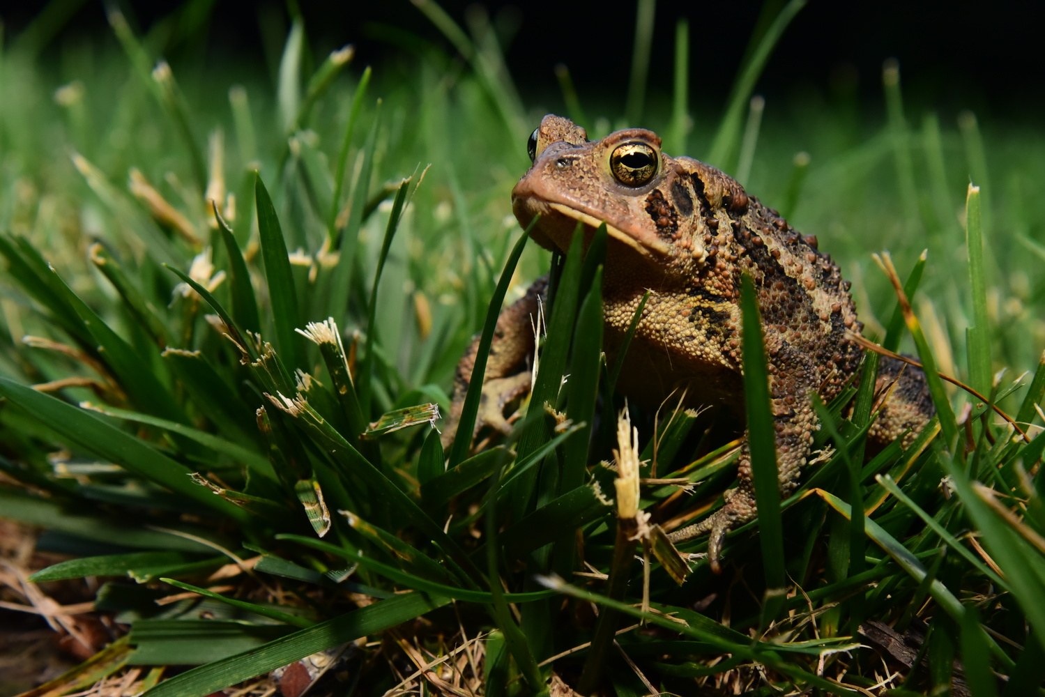 toad by Chris Freeman