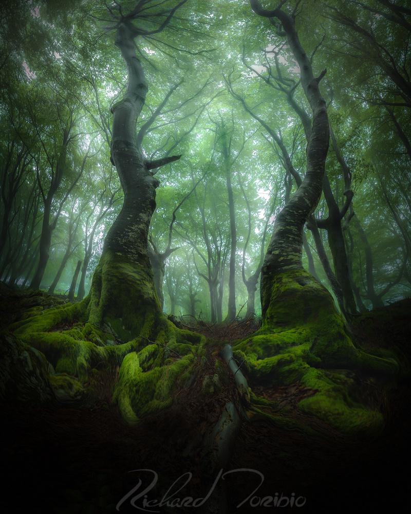 Pure Nature by richard toribio casares