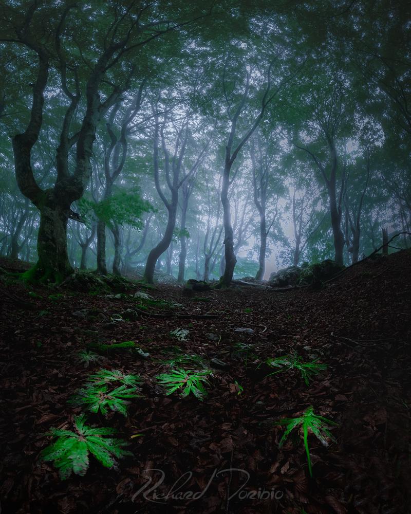 Ancestral Forest by richard toribio casares