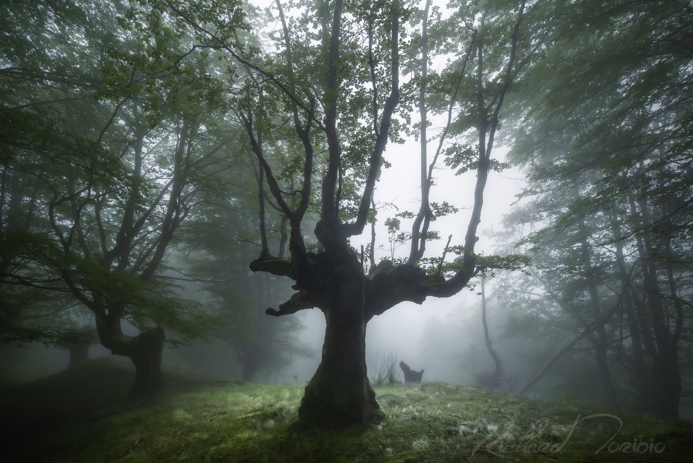 Silhouettes in the fog by richard toribio casares