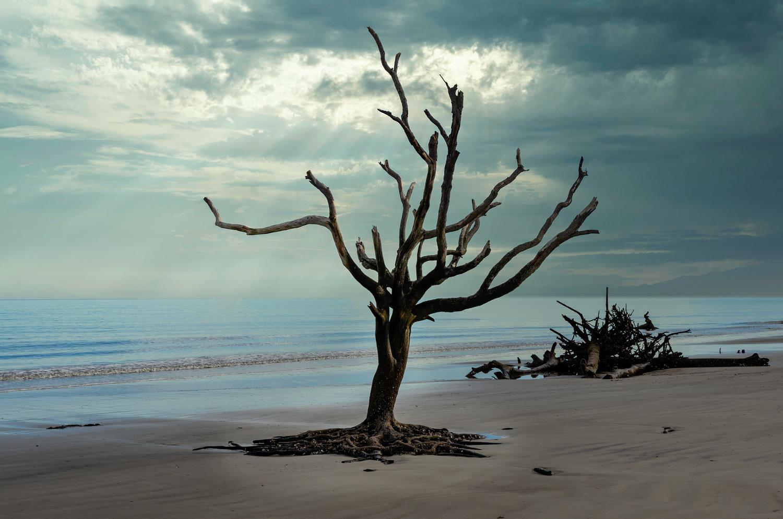 Alone by Wheeler McGowan