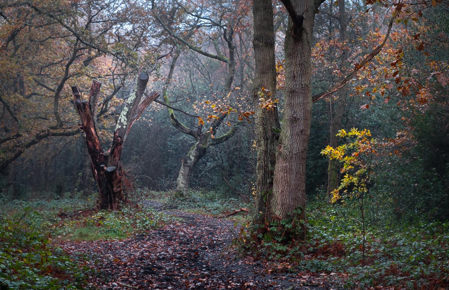 Dancers in the Woods by Julian Macedo