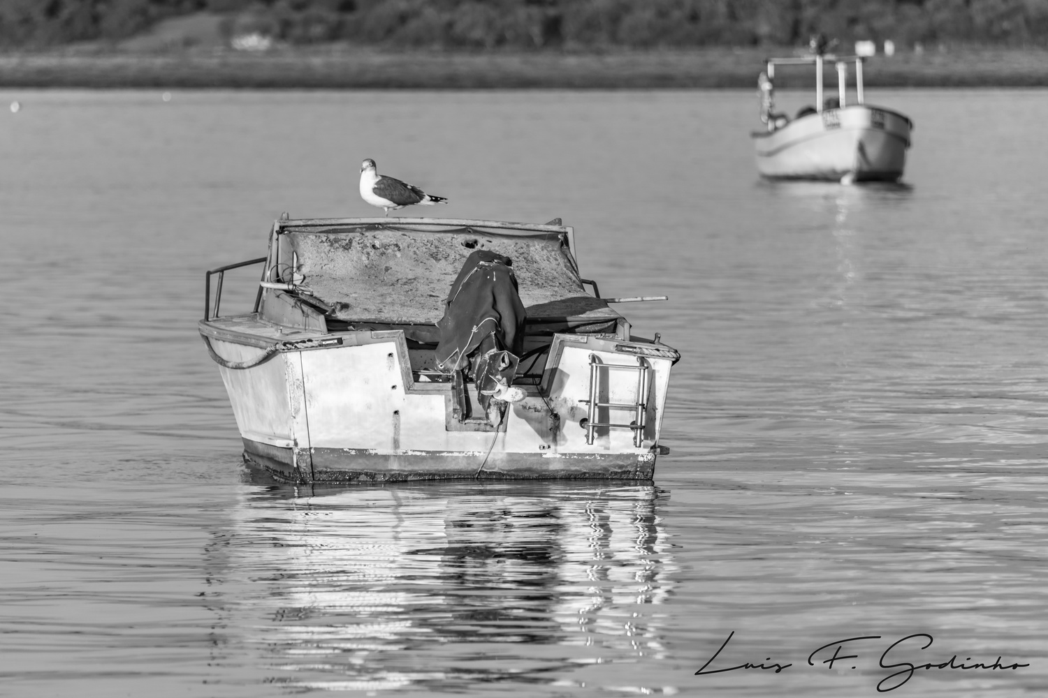 boat with a seagull by Luis F Godinho