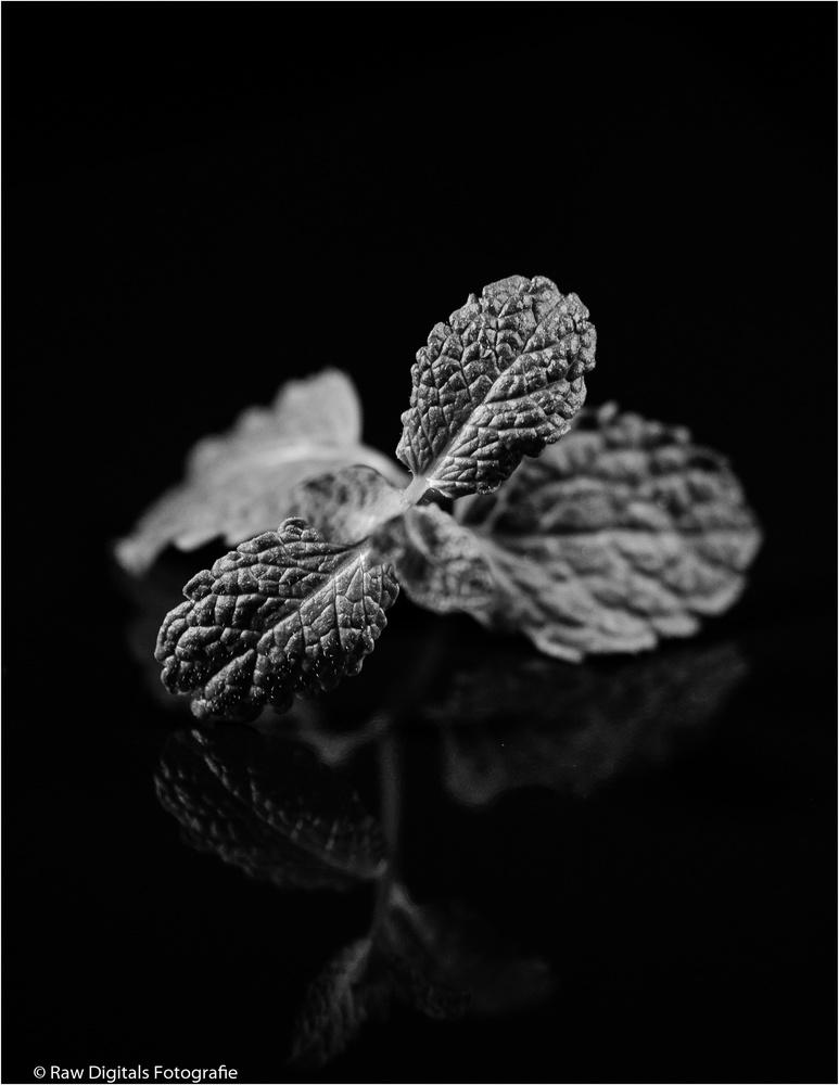 Mint leaves by Jurgen Westerheijden