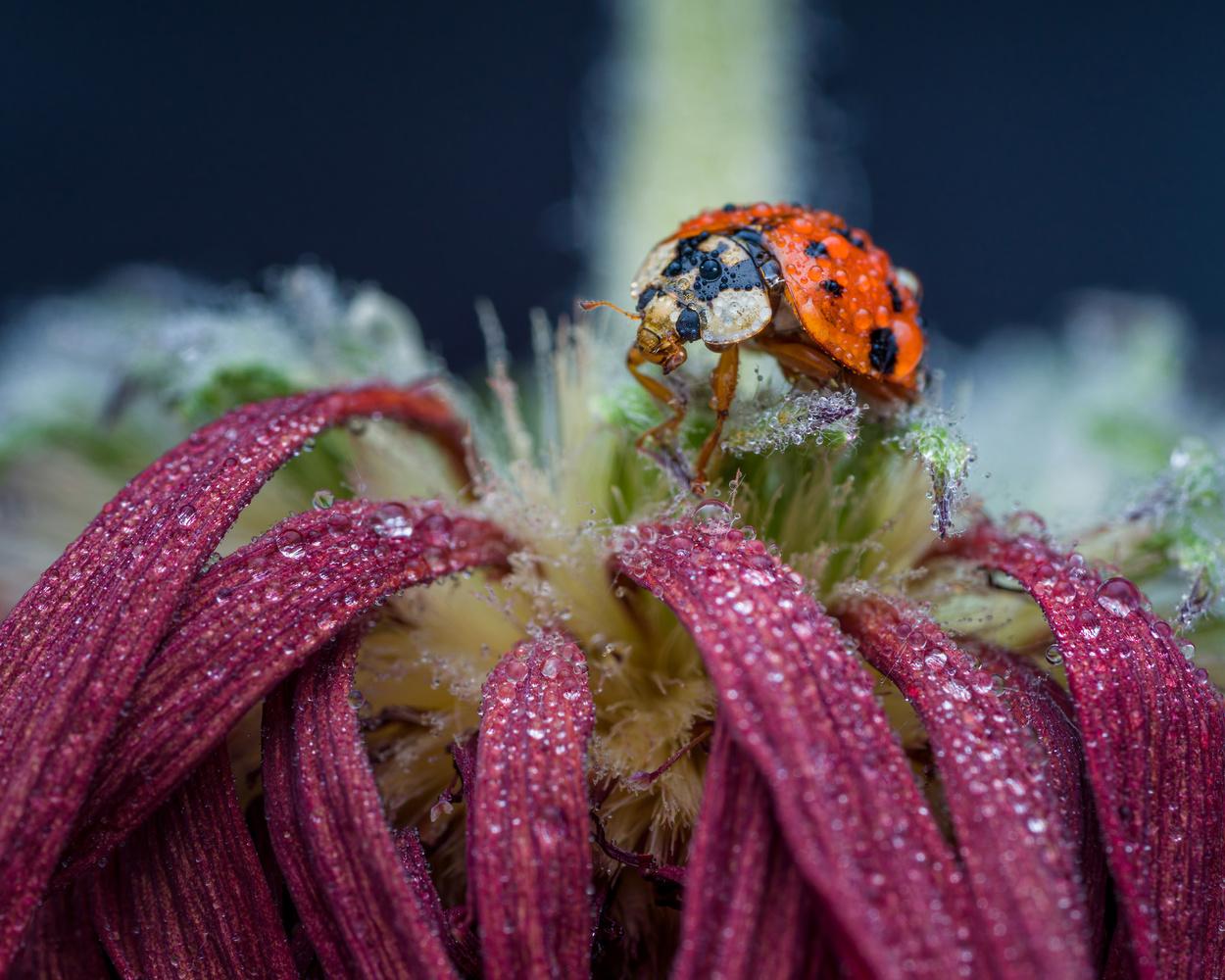 Ladybug by Skyler Ewing