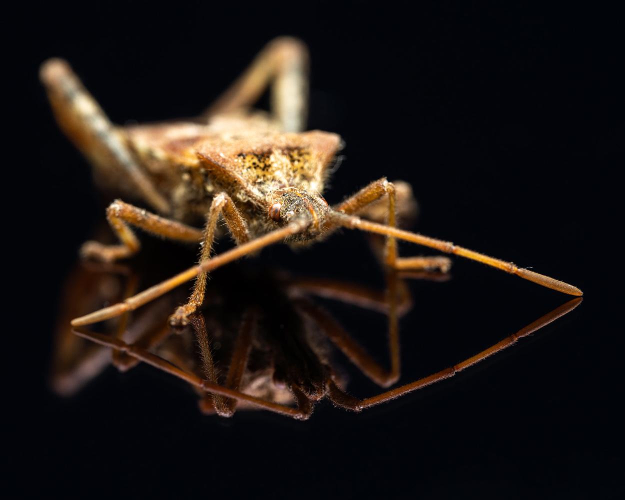 Leaf bug by Skyler Ewing