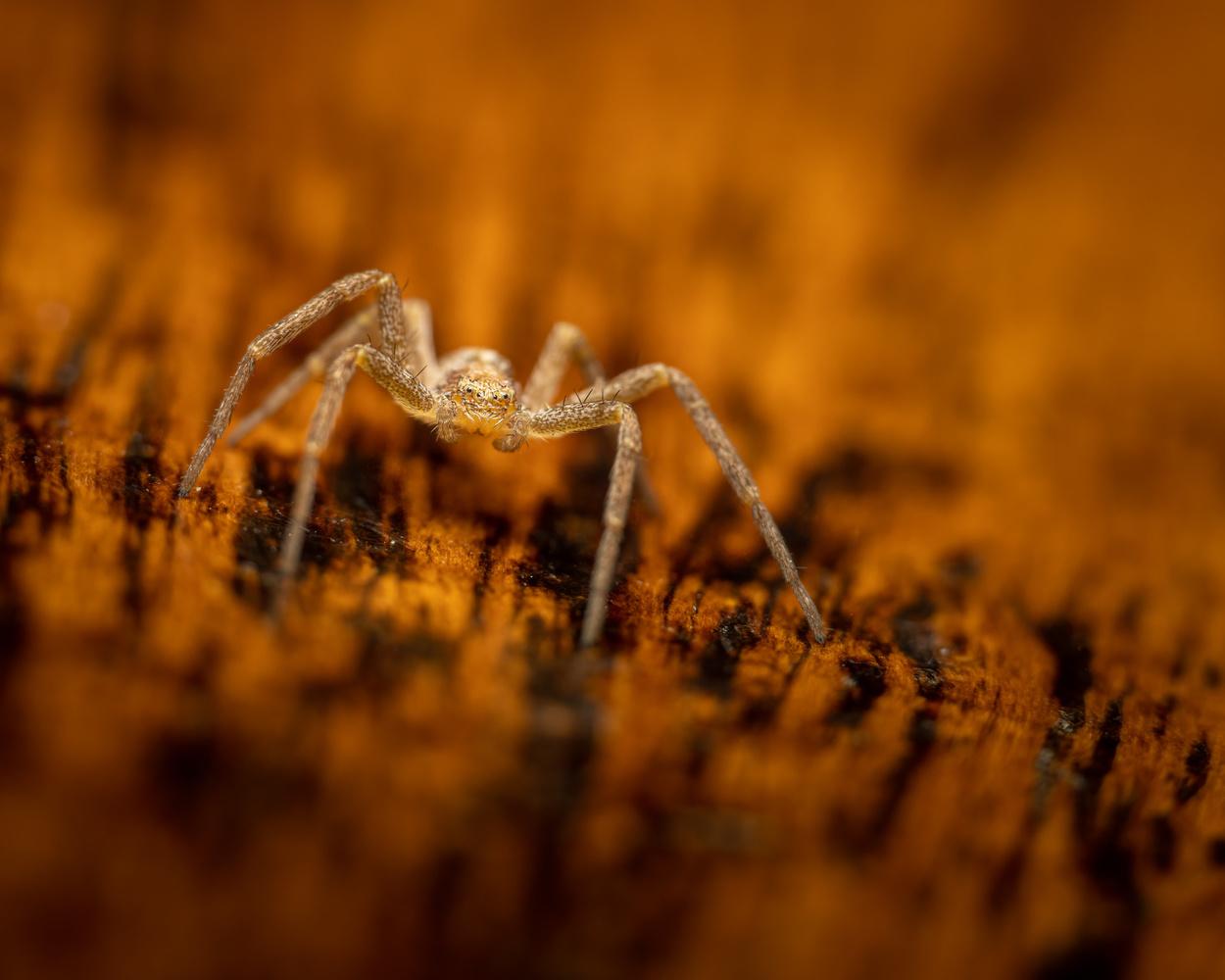 Spider by Skyler Ewing
