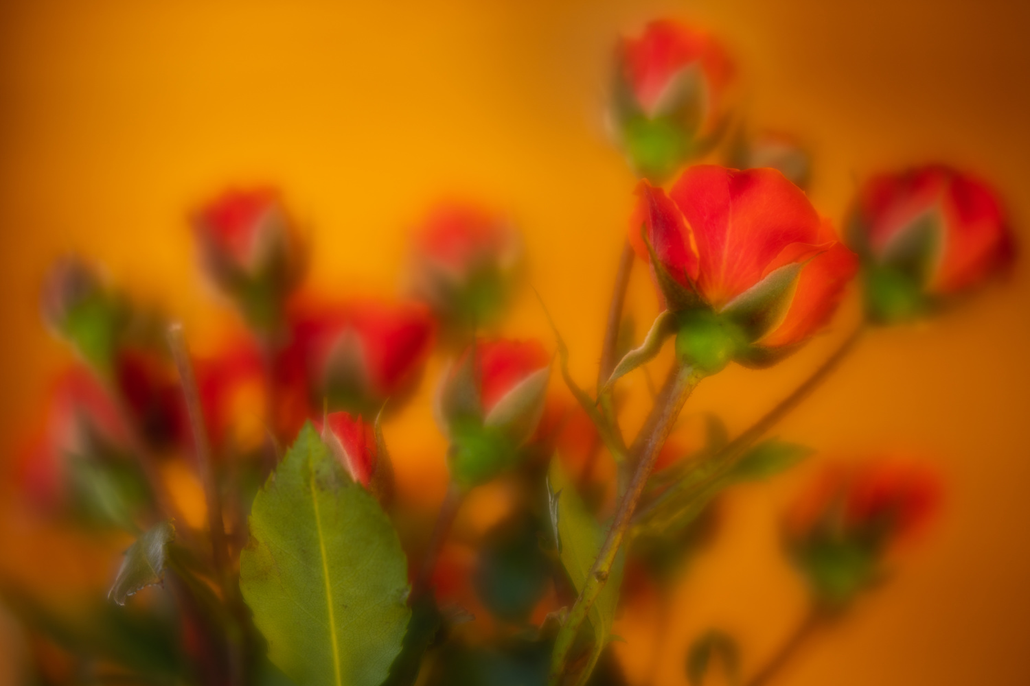 Playing around with lensbaby by Skyler Ewing