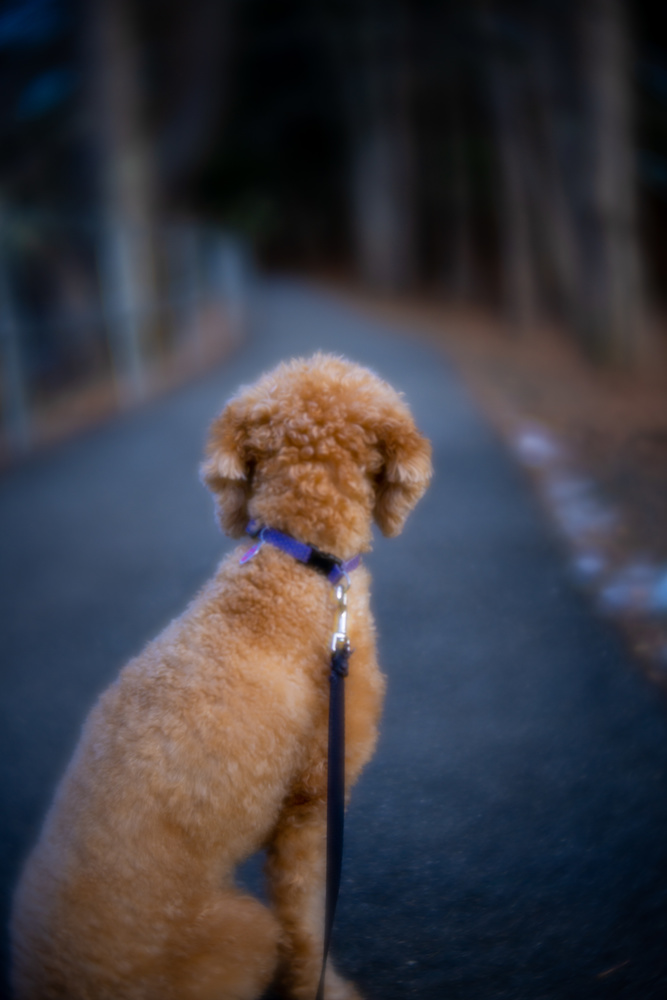 Playing around with lensbaby velvet by Skyler Ewing
