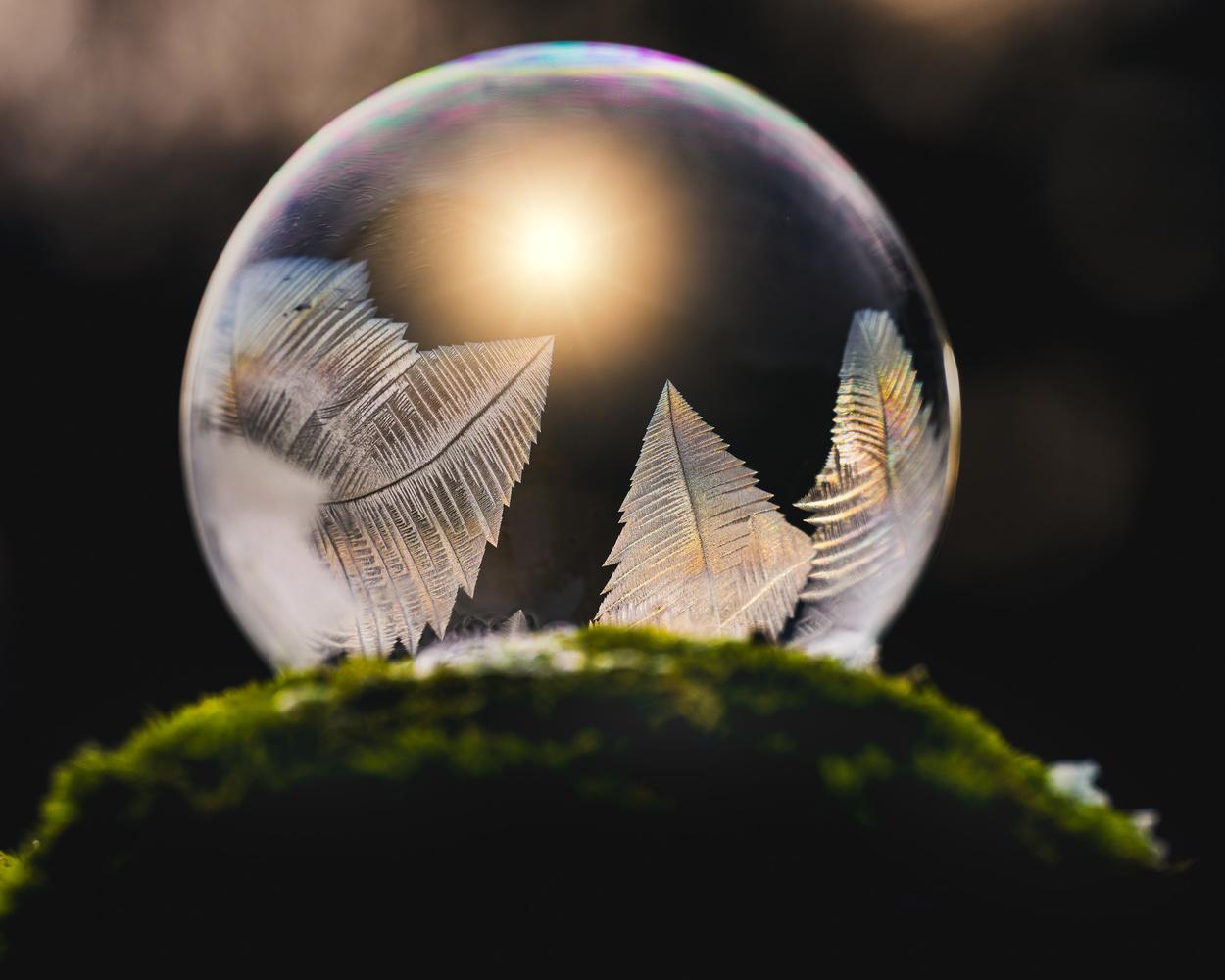 Frozen soap bubbles by Skyler Ewing
