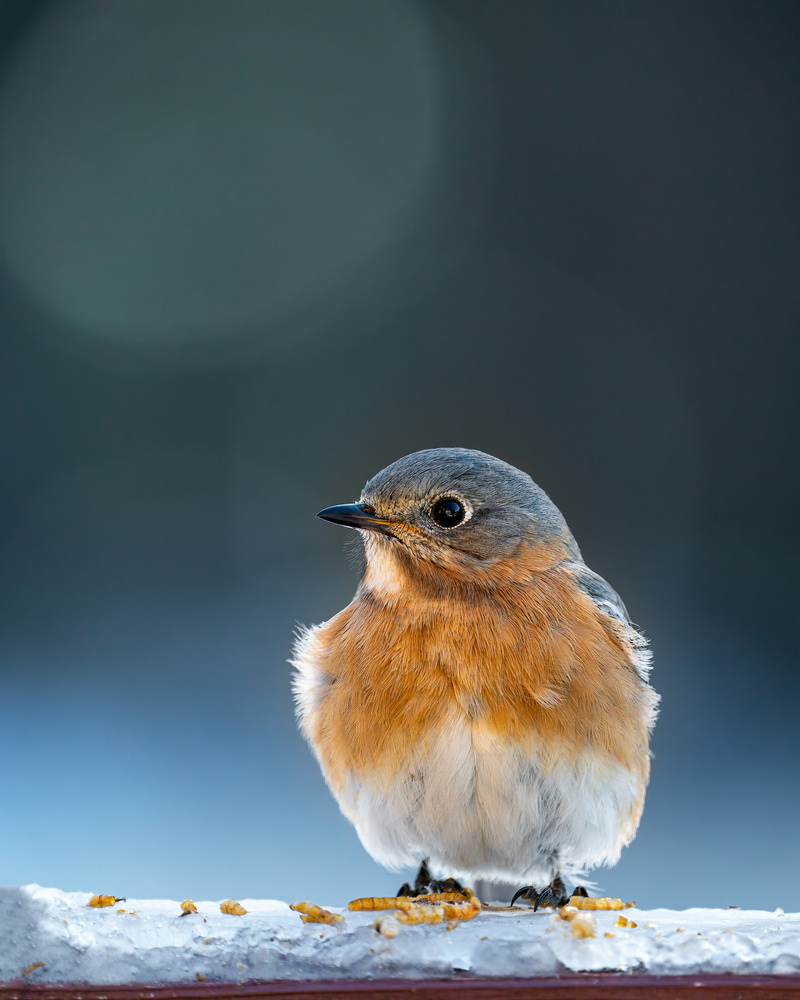 Bluebird by Skyler Ewing